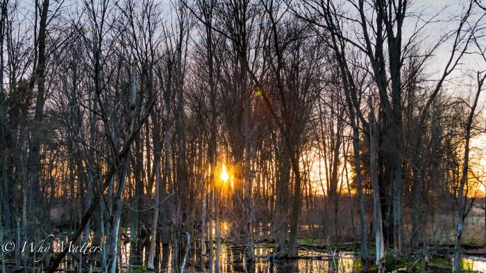 Wood Sun Water Sky